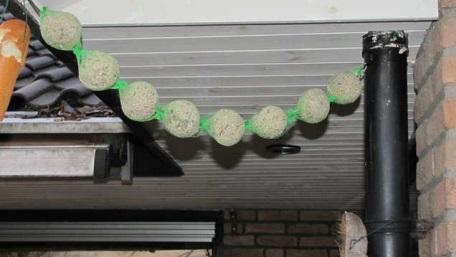 Babs en borre vogelbollen 4