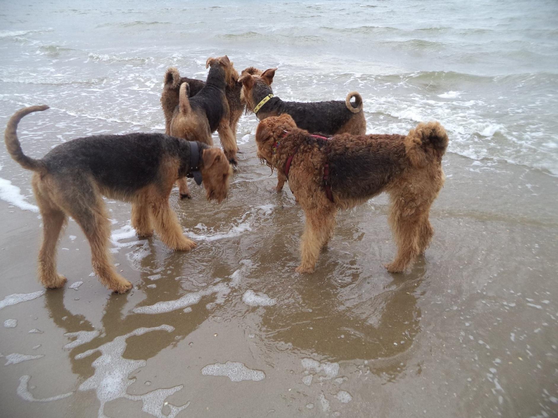 Strandwandeling Rockanje 4