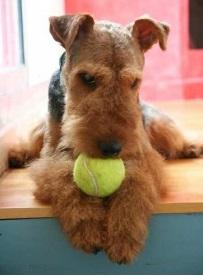 Babs en Boebie tennisballen 2