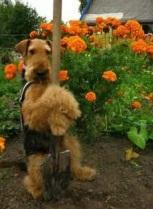 Babs en boebie helpen in de tuin 3