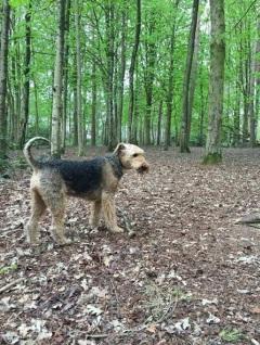 Beau in het bos en aan het water! 1