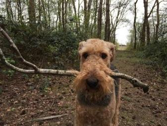 Beau in het bos en aan het water! 2