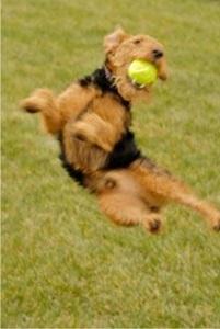 Babs en Boebie tas met tennisballen 3 -