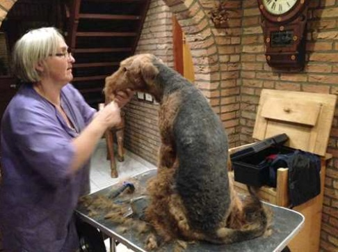 Babs en boebie hondenkapper 3