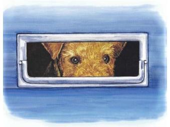 Babs en boebie hondenkapper 9